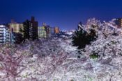 2020年村松公園桜まつりの屋台情報!花見の駐車場と夜のライトアップ時間も紹介!